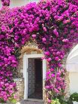 Flowers of Capri