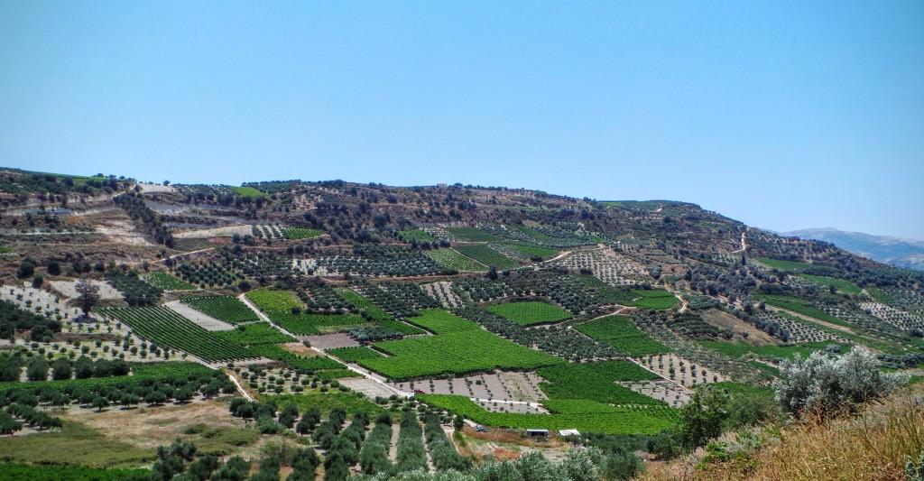 Crete Fields