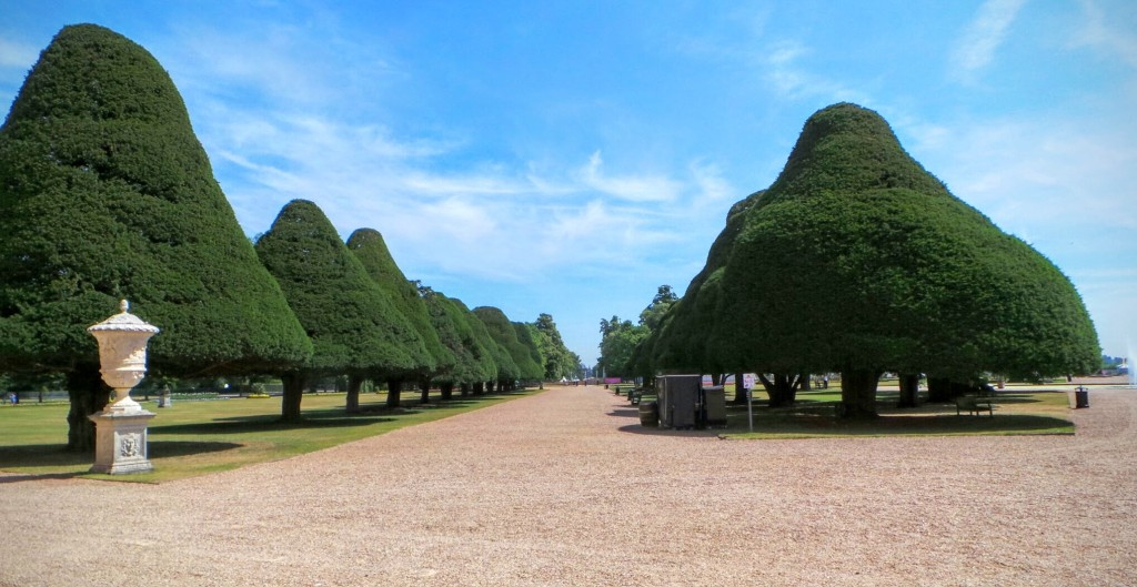 tudors-hampton-trees
